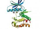 Proteine_virale