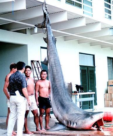 mercur in carnea de peste - rechin