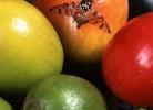 papaia (papaya) sursa de enzime digestive
