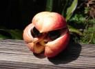 Ackee - fruct toxic, sursa de hipoglicină