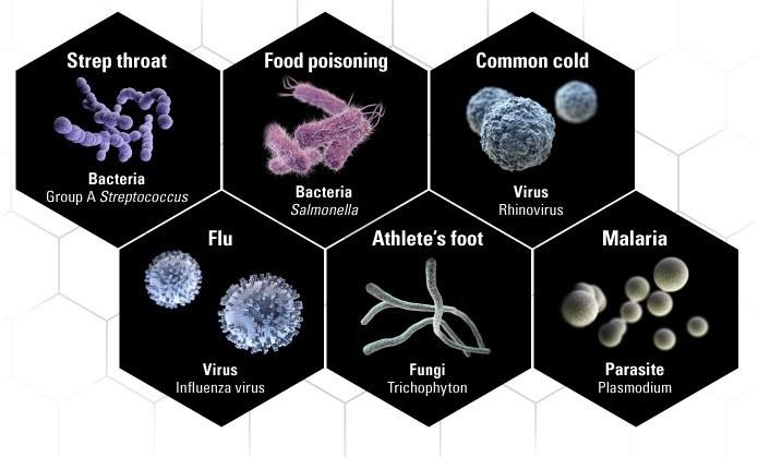 microorganisme rezistente la medicamente
