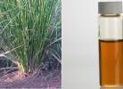 uleiul de vetiver și planta